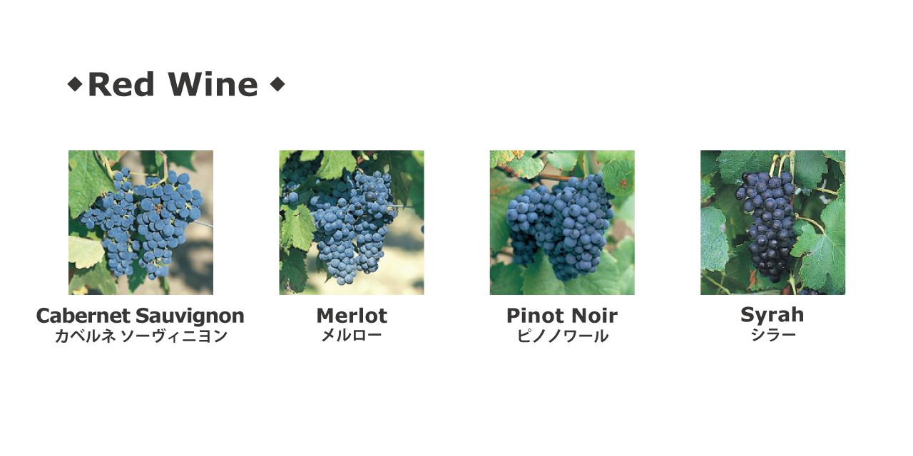 flax_赤ワイン品種